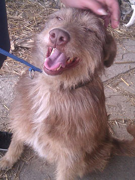 Kimba rescued by Street Dogs Saving Mission Bacau (happyly adopted in UK now)