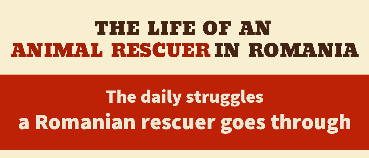 Life of a rescuer - image 1